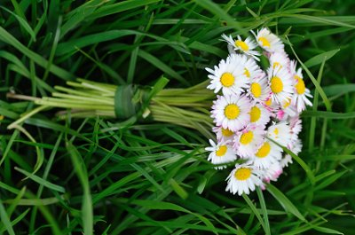 A bridal bouquet of white daisies sits atop the grass.