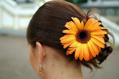 Bridal Hair with Gerbera Daisy. Back to Wedding Hairstyles
